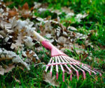 A Rake on Fallen Leaves