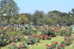 640px-Rose_garden_in_jubilee_park
