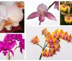 Orchid_Collage_for_Web
