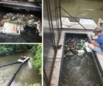 Water Pollution in Hendersonville's Mud Creek